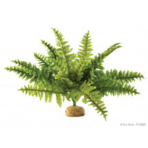 Растение ExoTerra Boston Fern Medium фото